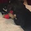 Apple puppies - 04/30/18 - Sherri Gengenbach