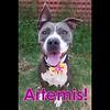 Artemis - 06/10/18 -
