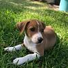 Baxter - 6/12/18