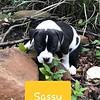Sassy - 9/12/18