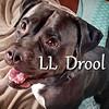 LL Drool J - 07/28/18 - Title