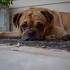 Baxter - 9/9/18
