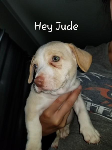 Hey Jude - 8/10/18