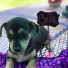 Donna pup 1 Bella - 08/06/2018 - Lisa Evins