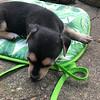 Donna pup 4 Ron - 08/06/2018 - Lisa Evins
