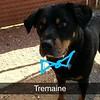 Tremain - 8/31/18