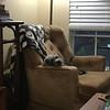 Wilbur - 9/12/18