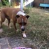 Rocco - 8/5/18