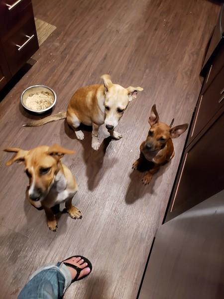 Pinto, Beans, Tofu - 7/22/18