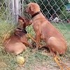 Peanut Butter & Jelly - 7/26/18 - Karen Hardwick