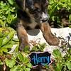 Harry - 8/5/18
