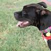 Winnie - 8/31/10 - Jessica Nickels