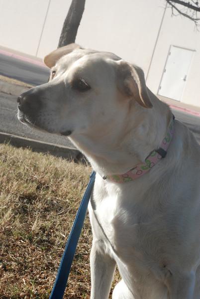 Taffy - 12-11-10 - Kate Aguilar