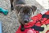 Trapper - 8/13/10 - Savannah Lightfoot