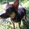 Linus - 8/23/10 - Katie Wranick