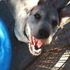 Bobbie - 8/3/10 - Sally Crewe
