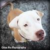 Sweetie-8/22/10-Chloe Pix Photography