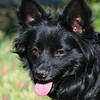 Raven (photographed 10/31/10 by Stuart Phillips d/b/a Grateful Dog Photo / Video / Design)