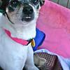 Rosie - 12/14/2010 - Summer Huggins