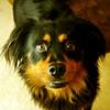 Bootsy - 11/12/10 - Gina Hush