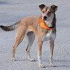 Mandy (photographed 11/13/10 by Stuart Phillips d/b/a Grateful Dog Photo / Video / Design)