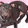 Stella - 10/19/2010 - Summer Huggins