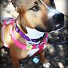 Cissy-8/22/10-Chloe Pix Photography