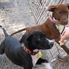 Sawyer and Sushi - 10/20/10 - Chiquita Babb