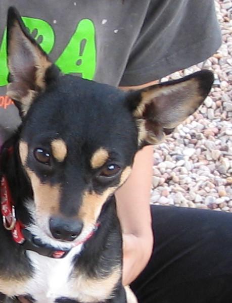 Dexter - 11/11/10 - Chiquita Babb