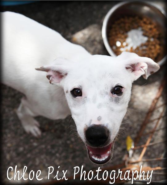 Beaker/7-24-10/Chloe Pix Photography