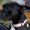 Winnie, 9/24/2010, Sylvia Cavazos-Malamon, Frolic Foto