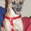 Dingo - 8/24/10 - Sandy Vickers
