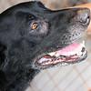 Sadie - 08/12/2010 - Summer Huggins