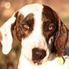 Daisy - 11/13/10 - Jessica Marsh