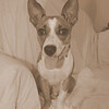 Trixie - 6/26/10 - Rebecca Rosenberg