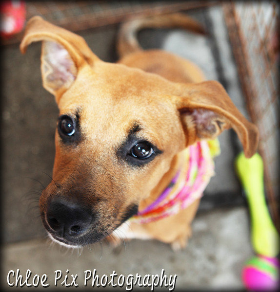 Isabelle/7-24-10/Chloe Pix Photography