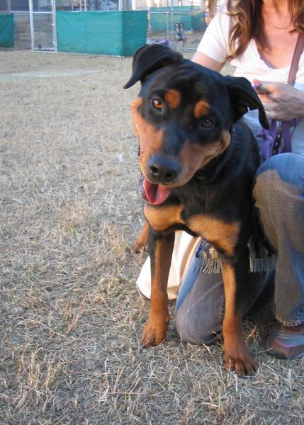 Ophelia - 12/15/10 - Savannah Lightfoot