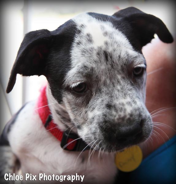 Daisy-8/22/10-Chloe Pix Photography