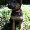Lucy - 8/23/10 - Katie Wranick