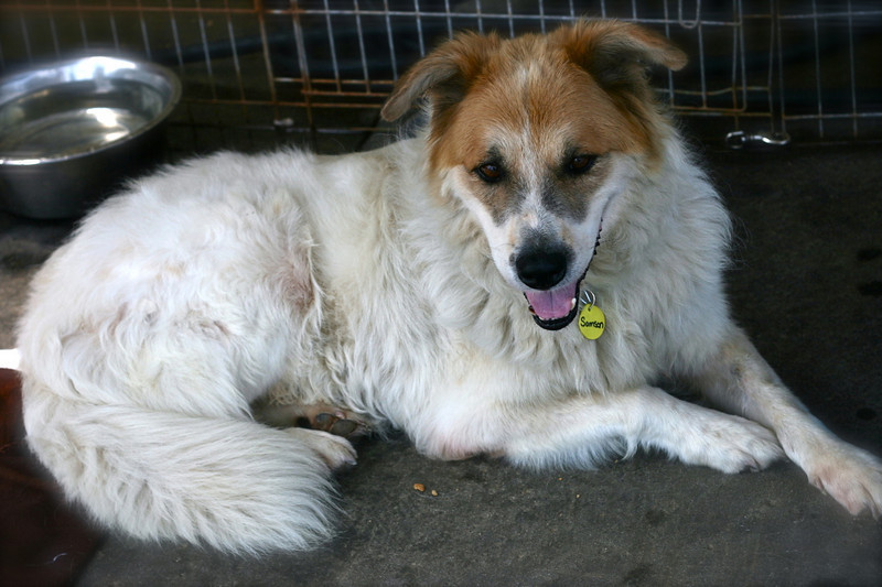 Samson - 08/12/2010 - Summer Huggins