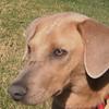 Joey - 12/17/10 - Ellen Ristow