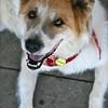 Samson - 08/24/2010 - Summer Huggins