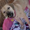 Sophie - 11/09/2010 - Summer Huggins