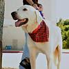 Tommy, 10/07/10, Sylvia Cavazos-Malamon, Frolic Foto