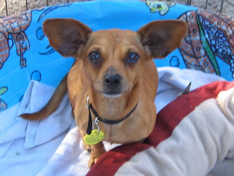 Vista - 11/13/10 - Chiquita Babb