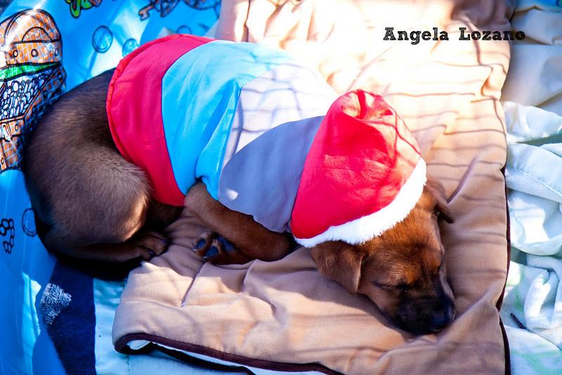 Maya, Angela Lozano, 11/06/10