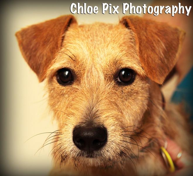 Micah-8/22/10-Chloe Pix Photography