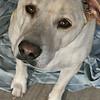 Taffy - 11/20/2010 - Summer Huggins