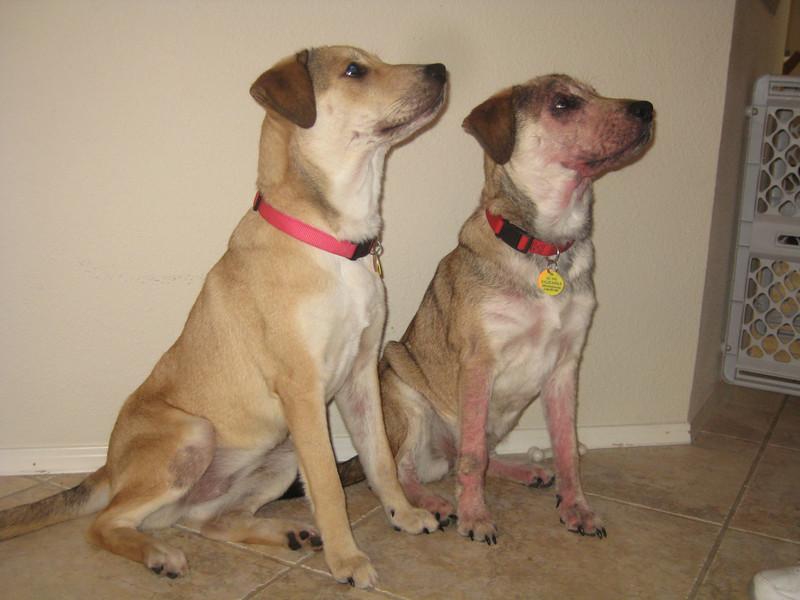 Kara and Chloe - 11/24/10 - Pam Martin
