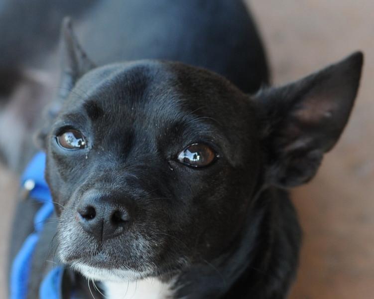 Pablo  -  072010  -   Stuart Phillips d/b/a Grateful Dog Photo/Video/Design